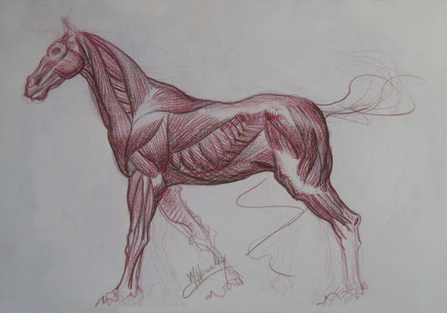 Michael Hensley, The Art of the Horse | Equine Studies | Anatomy of ...